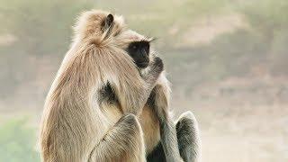 Best Of Wild Animals Caught on Spy Cam | BBC Earth