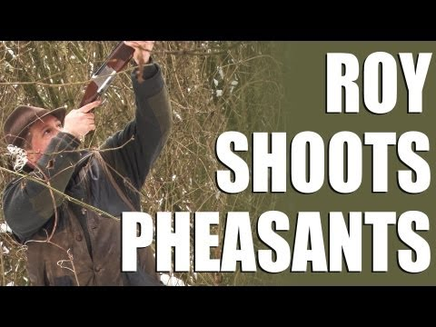 Driven pheasants – Roy goes on a shoot day in Hampshire