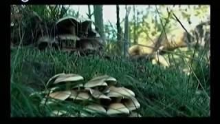Natuurlijk Oisterwijk met Frans Kapteijns aflevering 11