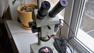 Микроскоп МБС-10, Microscope MBS-10