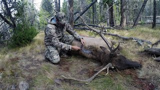 "SOLO HNTR 10.4 ""ARCHERY ELK"" Bowhunting bull elk with Remi Warren"