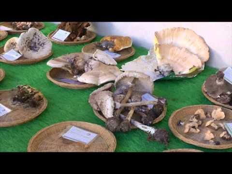 Se si deve rimuovere ununghia a causa di un fungo