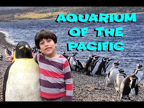 Aquarium of the Pacific Penguins Seals and Patrick Star