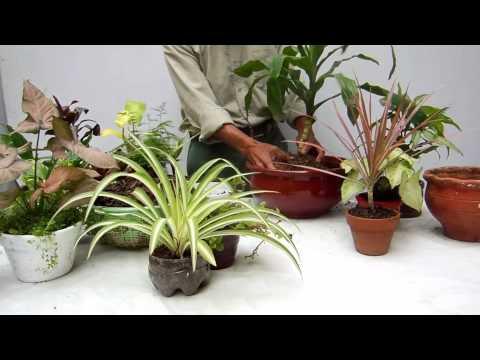 Un Arreglo Con Plantas De Interior Plantas - Centros-de-mesa-con-plantas-naturales