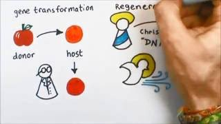 3 Minute Theology 4.2:  What is Regeneration?