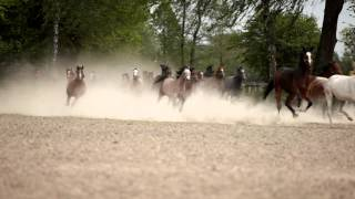 preview picture of video 'Stadnina koni w Janowie Podlaskim'