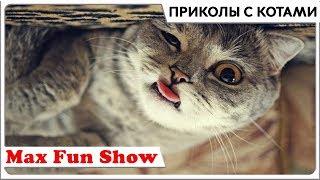 Приколы с котами . Смешные коты 2018 Funny Cats Coub