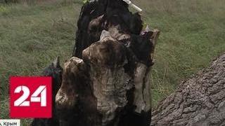 Массовое убийство в Керчи: Росляков превратил в полигон окрестности своего дома - Россия 24