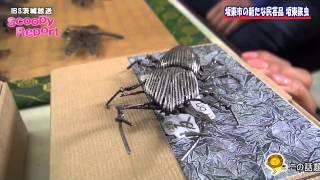 茨城放送スクーピーレポート「坂東市の新たな民芸品坂東鉄虫」