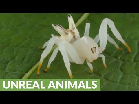 Anong pills worm bata na taon