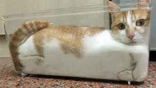 приколы про котов #16 - Подборка ...