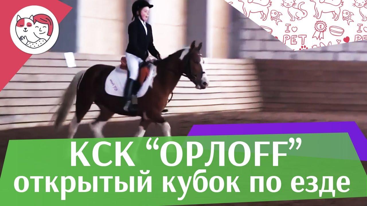 Открытый кубок КСК Орлоff   Выездка   4 на  ilikepet