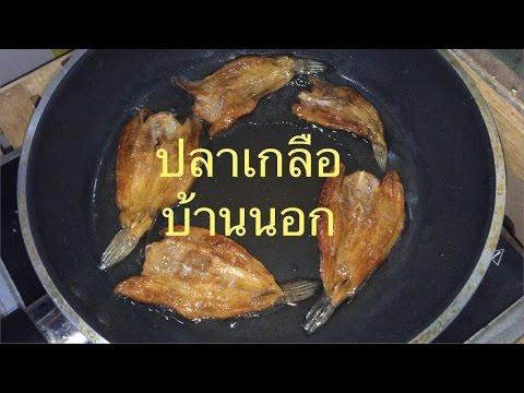 หนอนในปลาในตู้ปลา