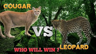 COUGAR VS LEOPARD - Who will win ?