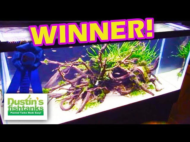 Aquascaping Contest Winners, Aquatic Experience 2015