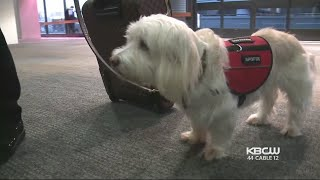 Delta Airlines Cracks Down on Passengers with Pets