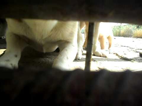 Adapostul canin Tulcea - 11.06.2011 - Part 4