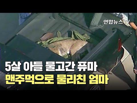 [유튜브] 5살 아들 물고간 퓨마 맨주먹으로 물리친 엄마