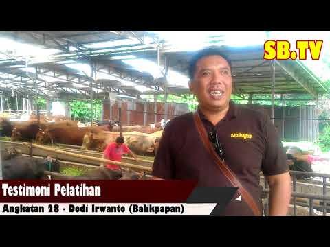 Testimoni Pelatihan Bisnis Sapi Potong Angkatan 28