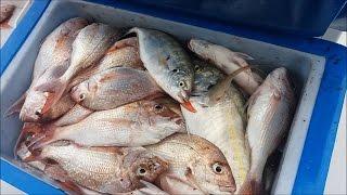 Рыбалка новой зеландии