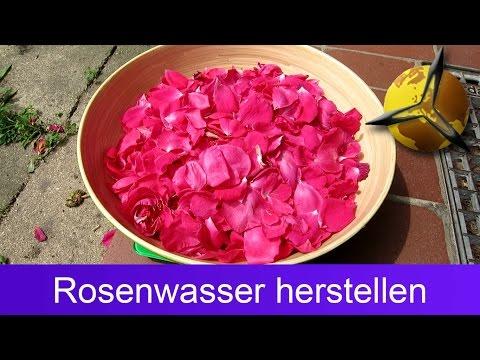 Rosenwasser selber machen / herstellen