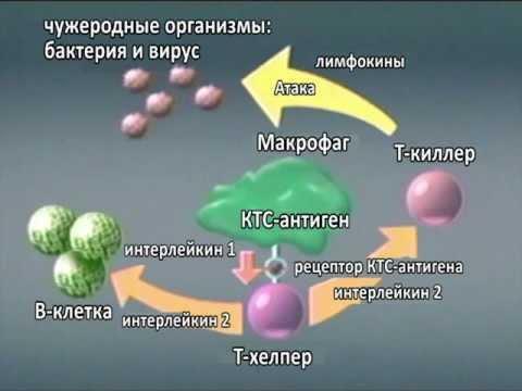 Пцр гепатит с определение рнк