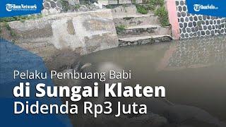 Pelaku Pembuangan Bangkai Babi di Sungai Klaten Terancam Hukuman 1 Bulan Penjara atau Denda Rp3 Juta