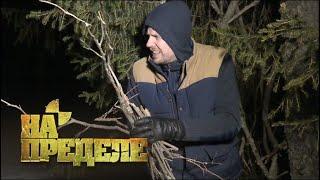Ночь в зимнему лесу