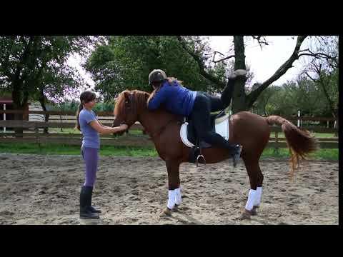 Działanie koń patogen za osobę