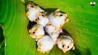 10 Animales En Peligro De Extinción Que Encuentras Solo En Honduras 🇭🇳