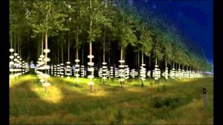 Animation for forest lighting installation