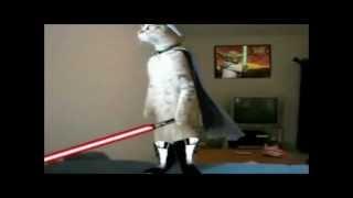 Jedi cats fights compy star wars