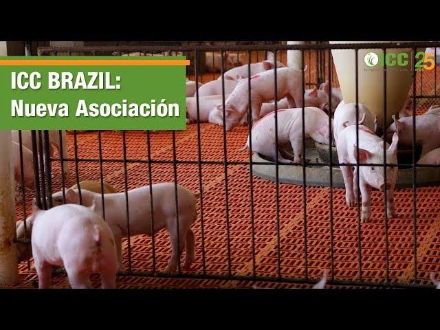 ICC Brazil firma asociación con granja comercial de cerdos