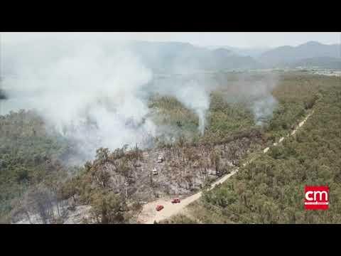 VIDEO. Incendie d'Alzitone : une forêt d'eucalyptus menacée