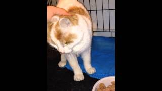 Starvin' Marvin; little kitty starved, shot and hit by car