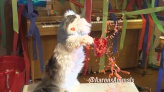 Epic Cat House Party - Video Youtube
