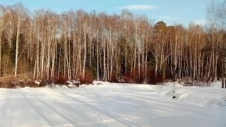 Мартовский день в лесу / Ден на похода в гората / March day in the forest.