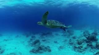 VR動画で沖縄 ツアー『沖縄 海中360度動画』4K 360°カメラの動画
