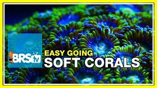 Week 35: SOFT CORALS! Selection, care, and placement | 52 Weeks of Reefing #BRS160