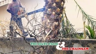 preview picture of video 'The Date Palm and The Chainsaw'