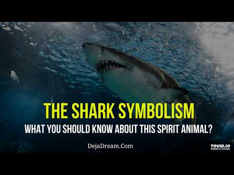The Shark Symbolism - What You Should Know About This Spirit Animal?