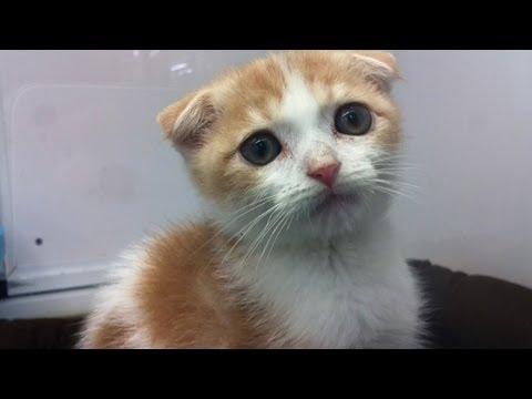 Cat sitting relaxed お座り猫ちゃん (видео)