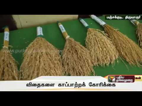 Farmers-in-Thiruvarur-requests-Government-to-save-the-traditional-rice-seeds