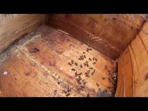 Тимол, использование по типу полосочек. Реакция пчел на тимол.