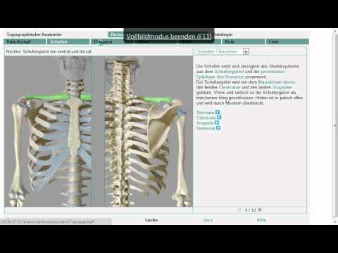 Behandlung des Schultergelenks zum Arzt