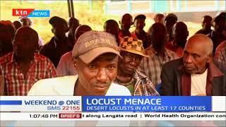 Desert Locusts cause menace in 17 counties