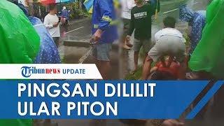 Video Viral Leher Remaja di Bali Dililit Ular Piton Tangkapannya hingga Pingsan