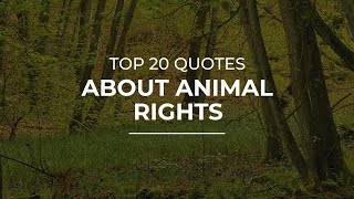 TOP 20 Quotes About Animal Rights | Daily Quotes | Super Quotes | Good Quotes