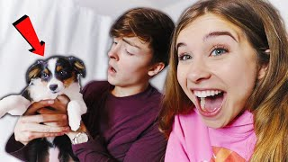 I Surprised My Boyfriend with a PUPPY! (Cute Reaction)