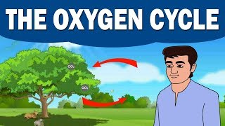 CH05-BIO – GEO – CHEMICAL CYCLES-PART10-OXYGEN – CYCLE